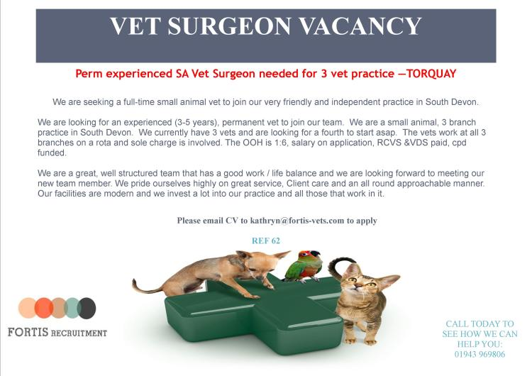 experienced sa vet surgeon wanted in Torquay.jpg