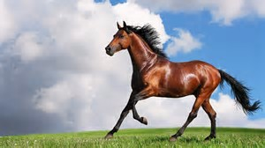 equine high def