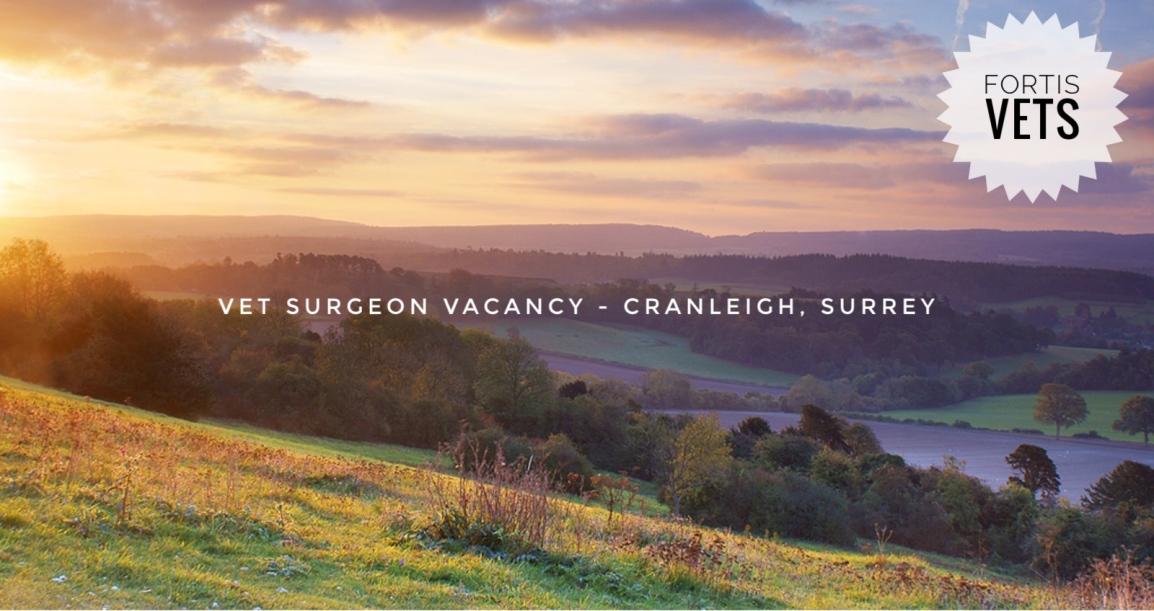 Vet surgeon vacancy – Independent practice- Cranleigh,Surrey