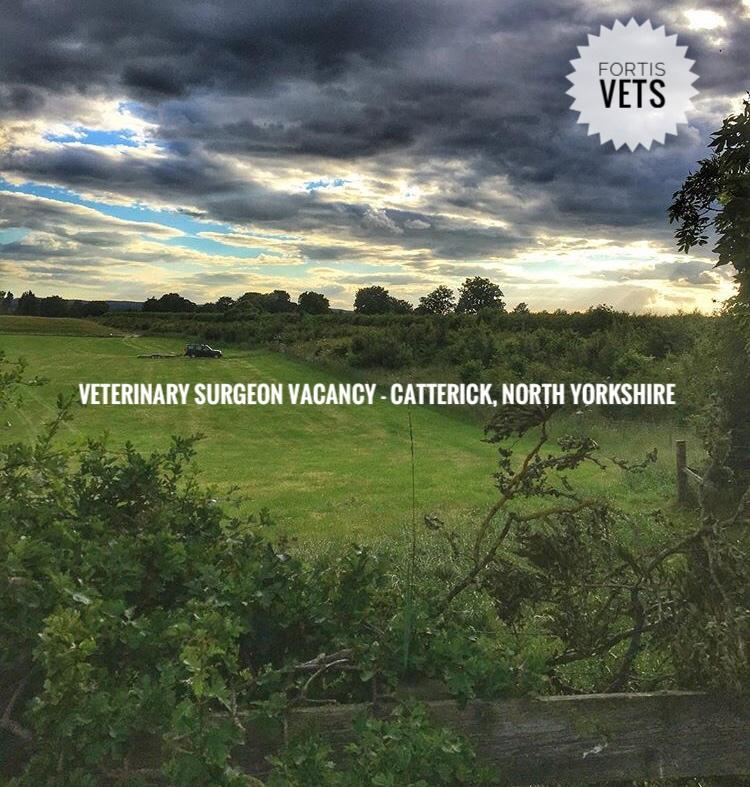 Veterinary surgeon vacancy – Richmond, NorthYorkshire